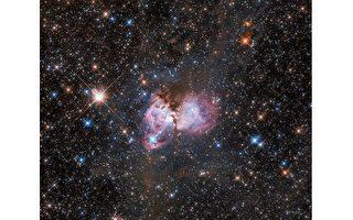 哈勃觀測:蜘蛛星雲正在誕生巨型恆星