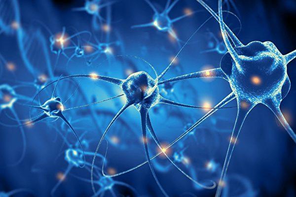 神經元如何排列組成大腦?科學家發現隱形指令