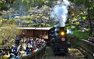 林鐵《SL-31蒸汽火車》阿里山花季限定體驗