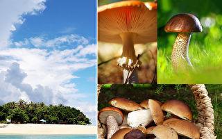 """艺术家隐居小岛 收集罕见蘑菇成""""大自然集锦"""""""
