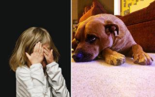 狗狗思念過世主人暴瘦 破例讓牠見最後一面