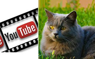 曾是街貓 現幫主人賺百萬 視頻、表情包紅遍世界