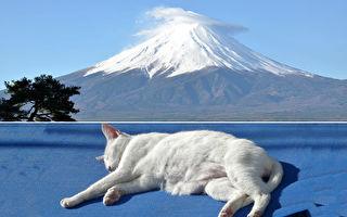 爱猫插画家风景画都是猫 猫是富士山也是火把