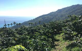 全国第三大种植地区  台东精品咖啡让人惊艳
