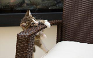 维州新法允许租客养宠物 房东不满