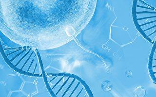 研究发现精子与卵子基因结合的关键细节