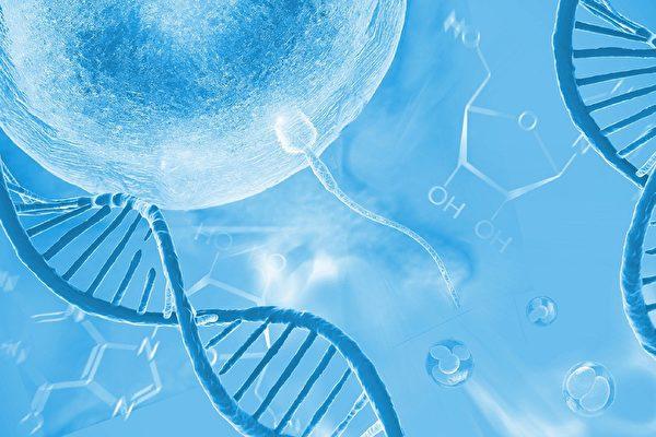 研究發現精子與卵子基因結合的關鍵細節