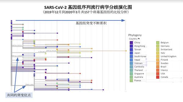 SARS-CoV-2基因組序列流行病分歧演化圖。(數據分析援引自gisaid基因庫)