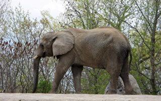 五千頭動物需要食物 多倫多動物園籲公眾伸援手