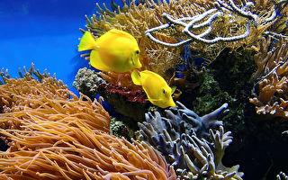 挽救珊瑚礁白化! 科學家用3D打印造魚苗棲息地