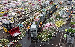 組圖:疫情衝擊 荷蘭單日銷毁數百萬朵鮮花