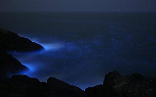 加州男子拍到萤光色海豚 如《阿凡达》奇景