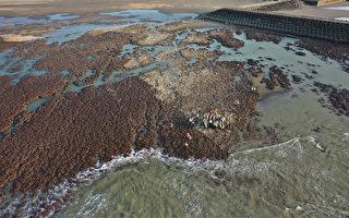 环团呼吁正视藻礁保育永续价值 勒令三接停工