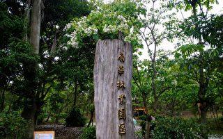 四月雪美景 花蓮南華林業園區開放參觀
