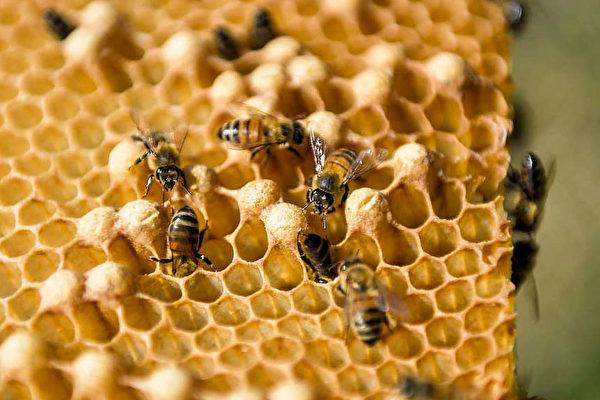 可提高免疫力? 瘟疫致麦芦卡蜂蜜销量大增