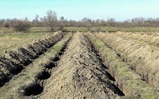 防疫打心理战? 乌克兰城市挖掘数百座坟墓