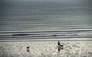 數百萬隻甲蟲在英國海灘神秘死亡 原因不明