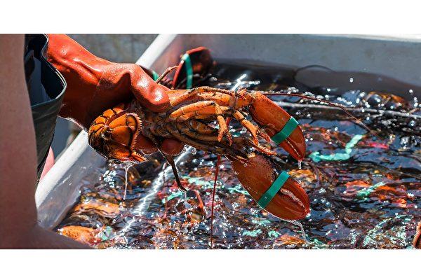 龙虾分解微塑料 进一步污染环境