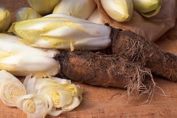 不过益菌生成分较多的部位不是菊苣的叶子和茎,而是菊苣根。(Shutterstock)