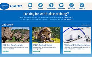 圣地亚哥动物园开放八周免费线上课程