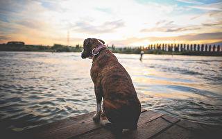 苦守海边一年等爷爷回来 救援团队动手救忠犬