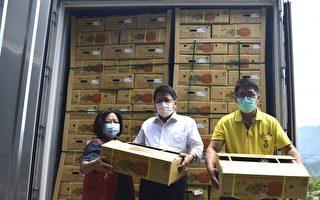 屏东凤梨拼外销  进军日本连锁超市