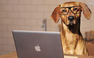 趣味組圖:疫情下小狗在家上班
