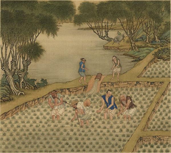 神農氏對人類的貢獻,首先是發展了農業。圖為清 陳枚《耕織圖冊·一耘》。(公有領域)