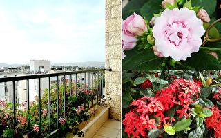 全年开花阳台必备6种花草 连新手也能养得很好!