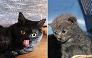 她風雨中救小灰貓 3個月後變黑貓 網:喝墨汁?