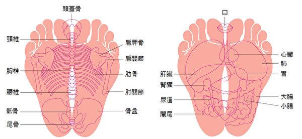 腳掌的一部分反映出身體某部分,此稱為腳底反射區。(和平國際提供)