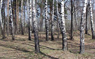 為躲避中共肺炎 俄羅斯一家人住到森林裡