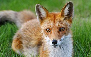移形幻化 狐女對其情人的點悟