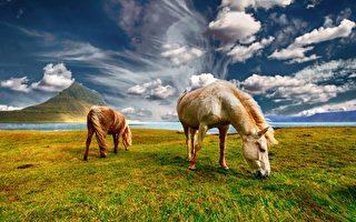 組圖:冰島的壯麗風景與駿馬 令人心曠神怡