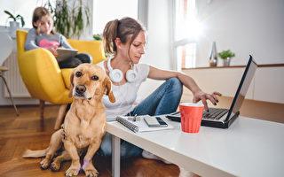 运动犬还是陪伴犬?根据您的性格挑选宠物狗