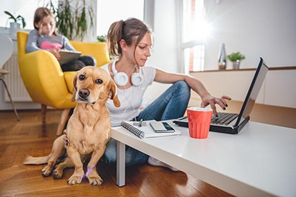 運動犬還是陪伴犬?根據您的性格挑選寵物狗
