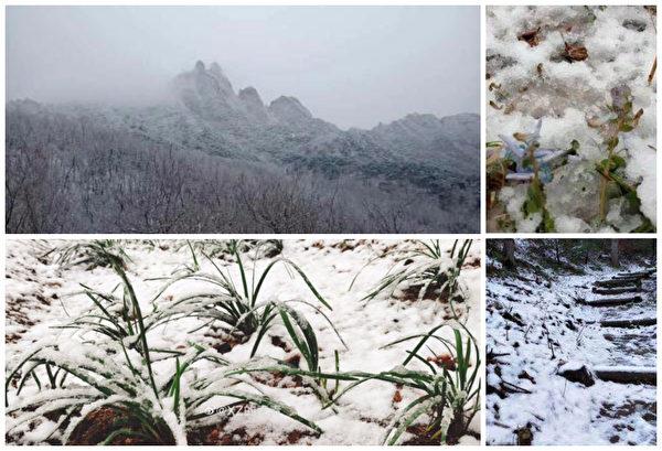 【現場影片】山東全省降溫 多地下鵝毛大雪