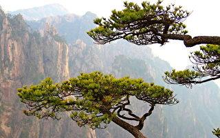 天地清明引(258) 众生劫-寒山之木3