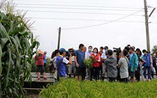 落花生病蟲害嚴重 可申請農田地利改良