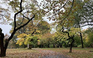 """公园人流增   纽约市成立公园""""恢复基金"""" 填补财政缺口"""