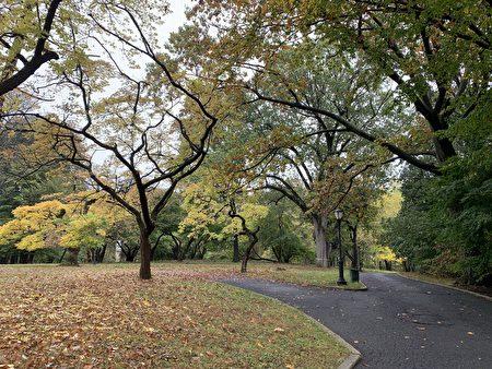 图为法拉盛凯辛娜公园。