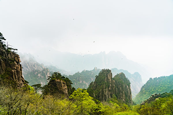 landscape of Huangshan mountain (Yellow mountain), Anhui, China with a black birds