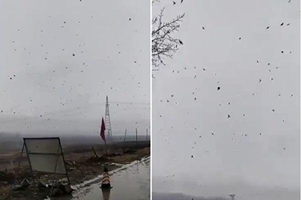 有民众在牡丹江镜泊镇庆丰村拍摄到万鸟齐飞的场景。(视频截图合成)