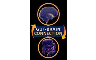 新研究找到大脑和肠胃之间的神经通道