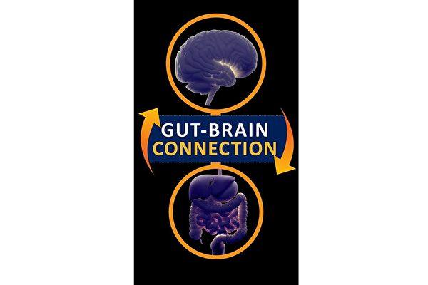 新研究找到大腦和腸胃之間的神經通道