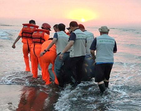 透过海岸巡护队偕同海巡署人力救回保育糙齿海豚。