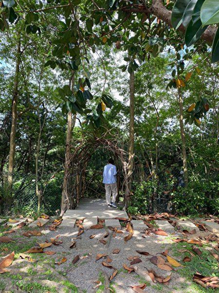 從隱蔽的竹編洞口入村。