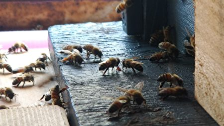 蜜蜂就像一把鑰匙,在接觸蜜蜂的同時,去關心更多物種的處境與環境的變化。