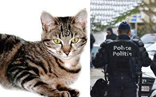 違反宵禁!虎斑貓被逮捕還被拍「罪犯大頭照」