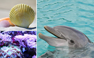 因疫情澳洲海灘關閉 海豚狂送禮物給志工:換魚吃